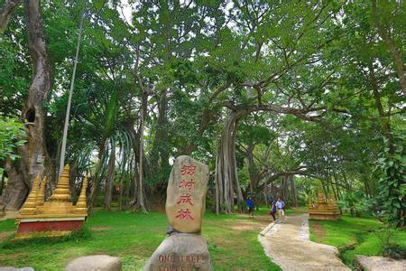 独树成林风景区】(含电瓶车),参观边防巡逻路,神秘山寨,在中缅220界碑