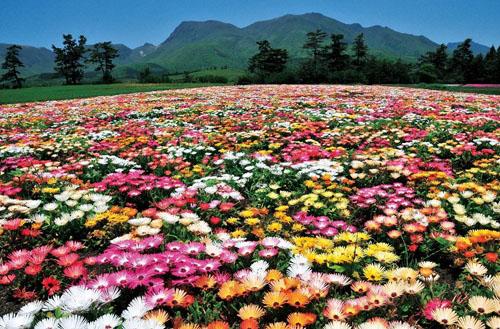 九州自然动物园非洲冒险公园是日本为数不多的野生动物园(对动物进行