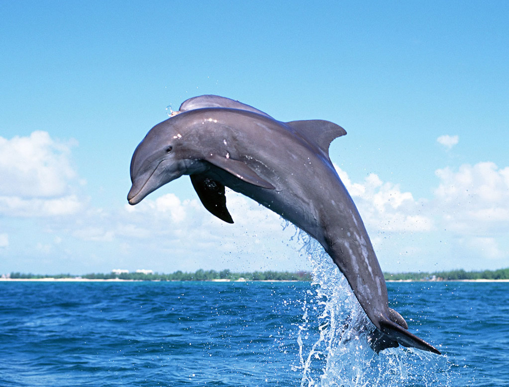 【高大上 吐血畅收】澳大利亚6晚8日海豚岛 送飞行学校体验 全程qf