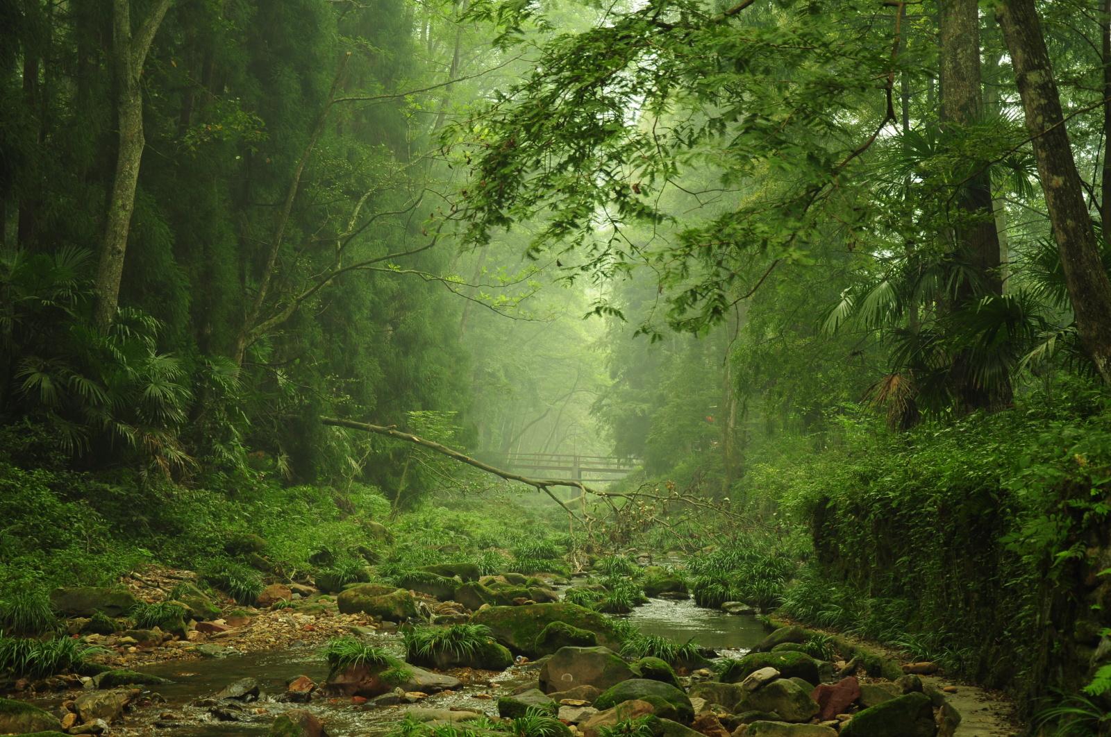 微信头像图片树林风景