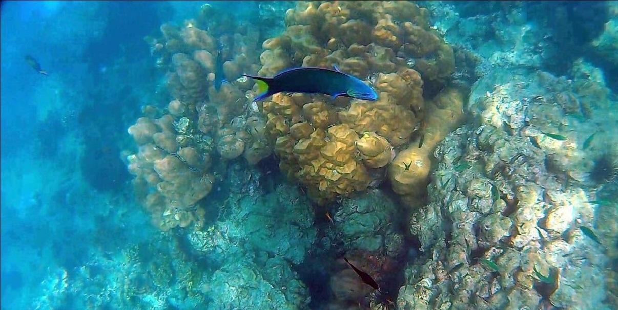 壁纸 海底 海底世界 海洋馆 水族馆 桌面 1206_606