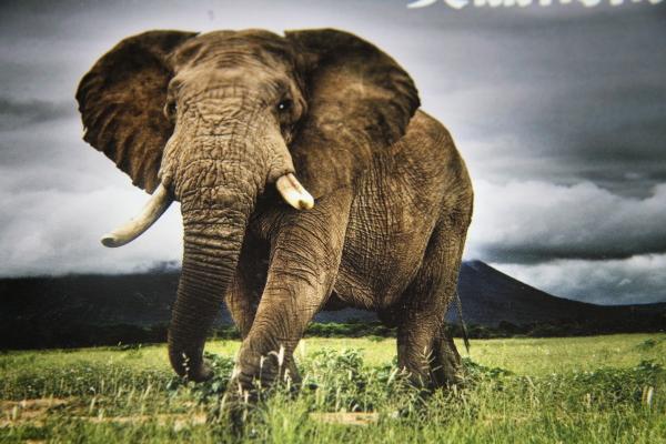 动物园宣传册素材