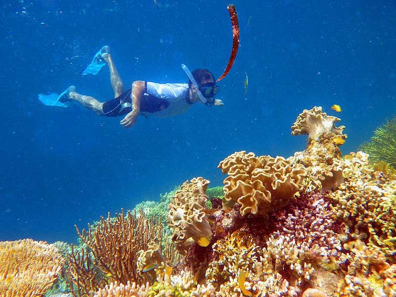 壁纸 海底 海底世界 海洋馆 水族馆 桌面 800_600