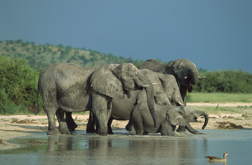 以丰富的动物活动而闻名于世