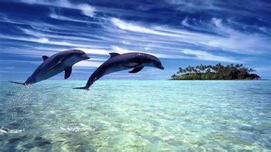 【畅收】澳式农庄 海豚岛6晚8日(悉尼情人港 水族馆 蜡像馆 梦幻山庄