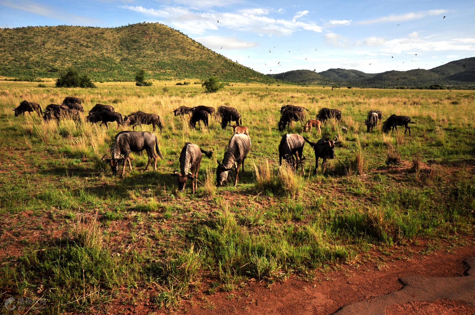 南非四大野生动物园之一)