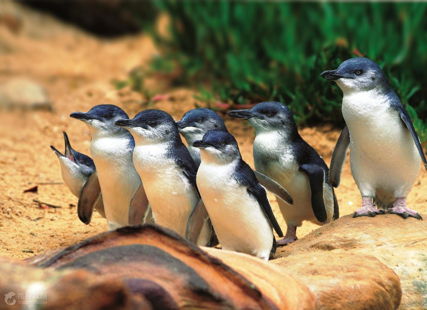 动物 企鹅 1417_1029