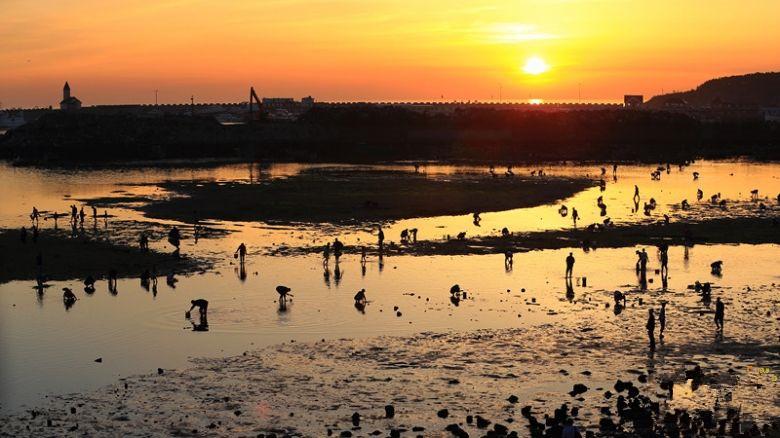 【暑期】【至臻海岸】青岛,海阳万米沙滩,石岛出海,威海,蓬莱,大连,威