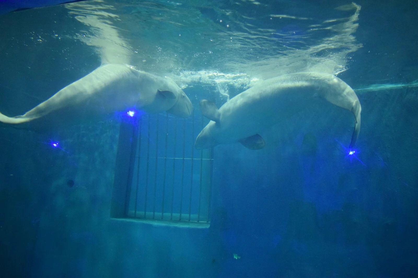 壁纸 海底 海底世界 海洋馆 水族馆 1600_1066