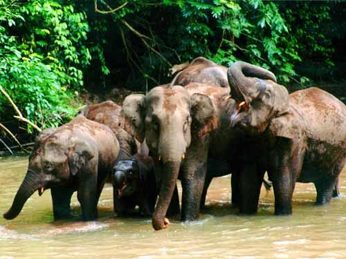观看【大象表演】;游览4a级旅游风景区