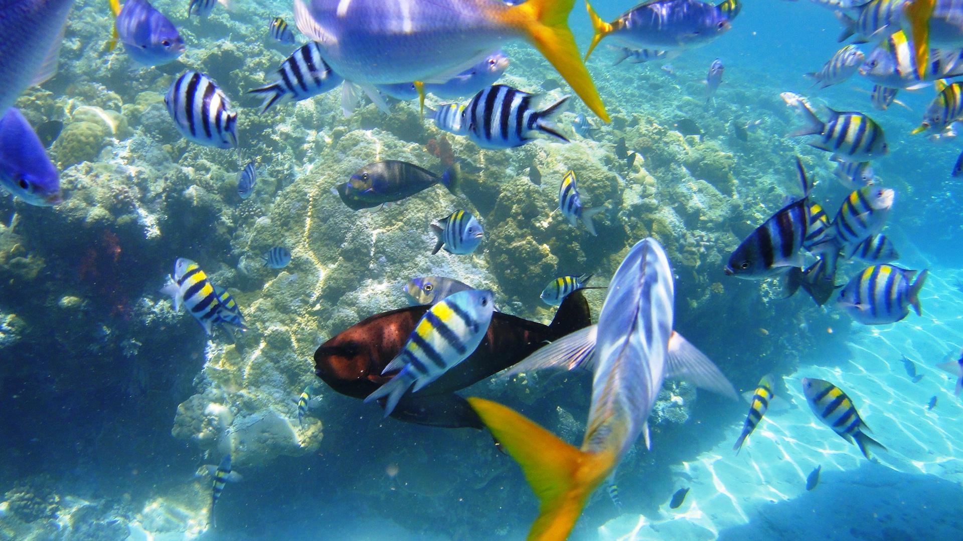 壁纸 海底 海底世界 海洋馆 水族馆 1920_1080