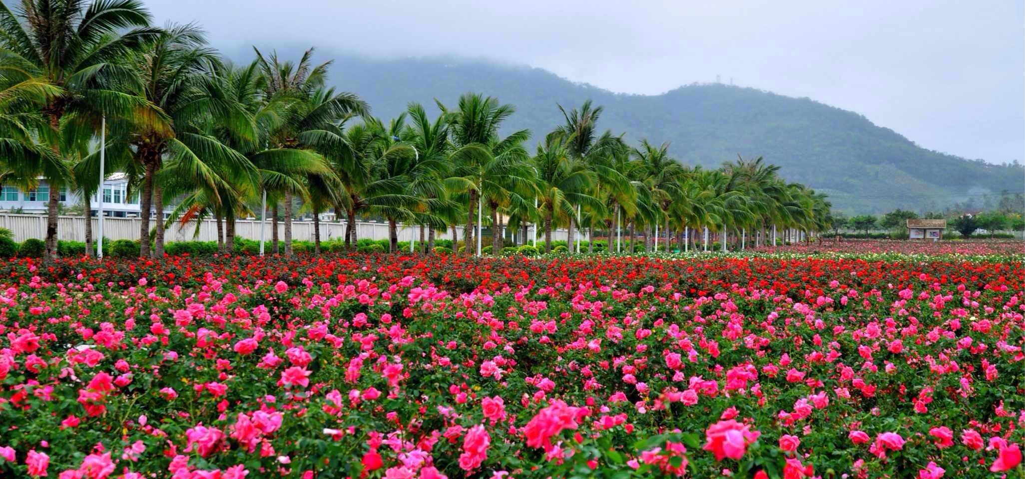 海南海口红树林,分界洲岛,槟榔谷4晚5日跟团游(双飞)