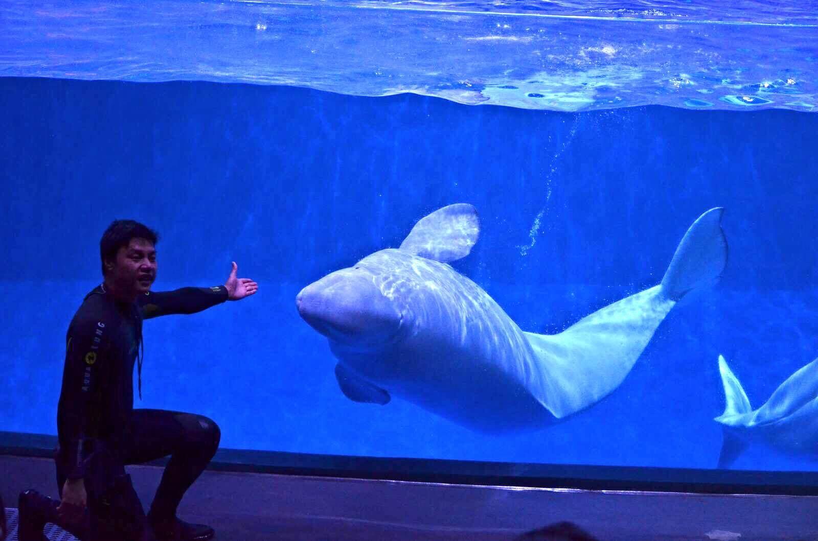 【错峰游】广州长隆欢乐世界,野生动物园,珠海长隆海洋王国2晚3日跟团