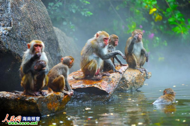 海南海口分界洲,南湾猴岛
