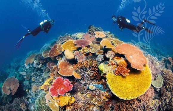 如果没有亲自深入这片水晶般的海底世界,您就错过了澳洲极美的部分了.