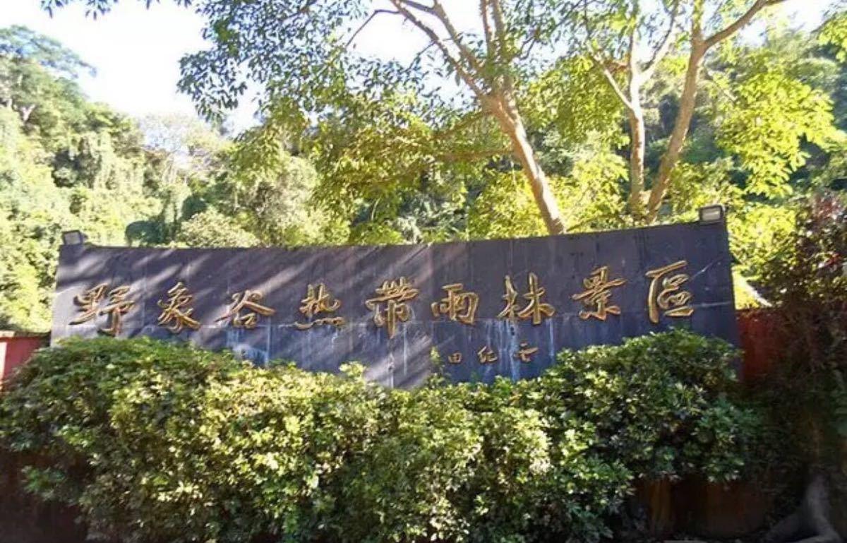 美景游】野象谷,普洱国家森林公园,万达陆乐园,总佛寺,花卉园