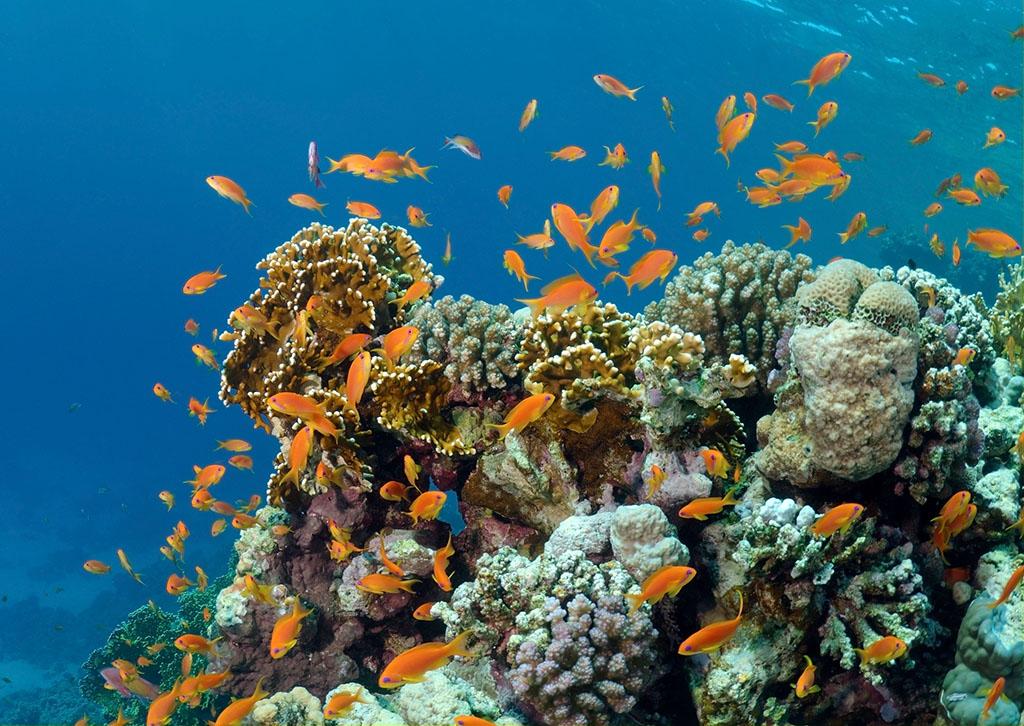 壁纸 海底 海底世界 海洋馆 水族馆 桌面 1024_726
