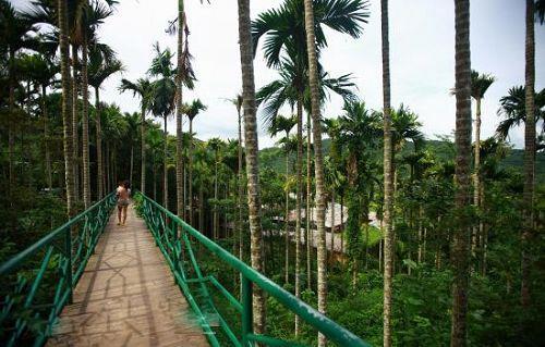 海南海口4晚5日跟团游(分界洲岛、天堂森林公园、天涯海角、大东海、椰田古寨、玫瑰谷)